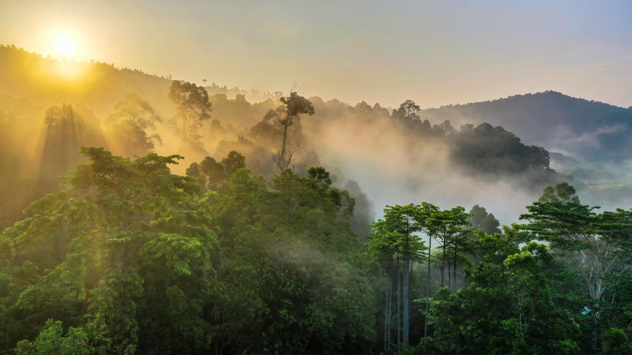 Tropical,Rainforest,,Stunning,View,Of,Borneo,Rainforest,With,Sunrise,Mist